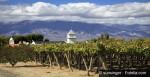 argentina-wine